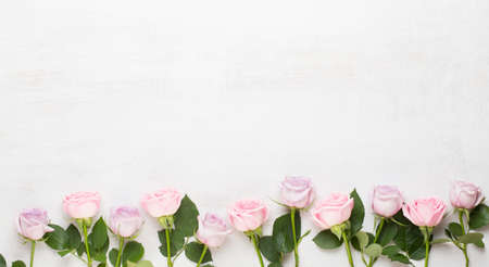 Spring greeting card, pastel color rose on the gray background.  Flower greeting card. Flat lay. Reklamní fotografie