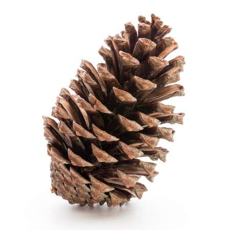 Christmas decor,  pine cone on white background. Reklamní fotografie