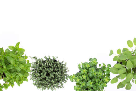 Variety fresh herbs isolated on white background. marjoram, parsley, basil, rosemary, thyme, sage.