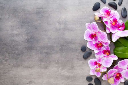 Orchid and spa stones on a stone background. Spa and wellness scene. Stockfoto
