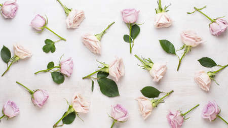 Floral pattern made of pink and beige roses on white background. Flat lay, top view. Valentine's background