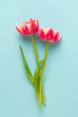 Spring flowers. Tulips on pastel colors background. greeting card Retro vintage style. Mother day, easter greeting card.
