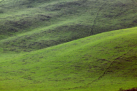 rolling hills: green hills texture landscape. Lajatico, Italy Stock Photo