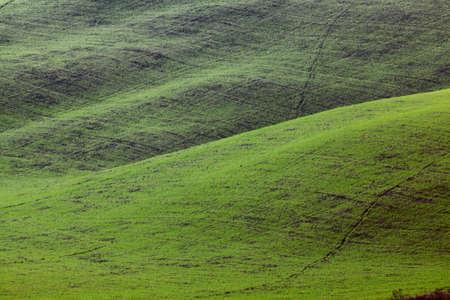 green hills texture landscape. Lajatico, Italy Stock Photo