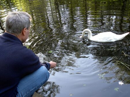 Moscow, Russia - May 30, 2010: Mute swan makes a living from hands