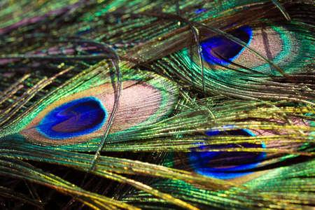plumas de pavo real: Cierre de tiro de un plumas de pavo real Foto de archivo