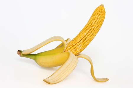 genetica: Manipolazione Photo: pannocchia di mais con la buccia di banana Archivio Fotografico