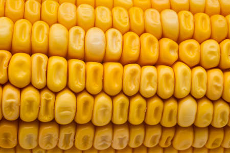 corn: Yellow Corn grains close-up shot Stock Photo