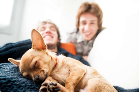 smiling couple of men that could be either gay or friends with a small cute dog Stock Photo