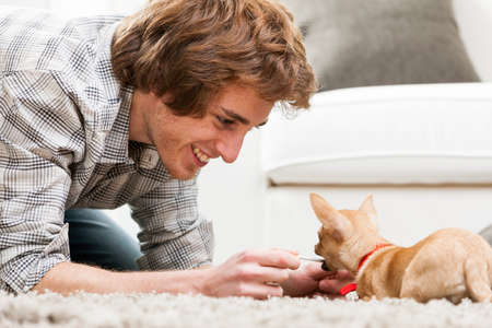 pull toy: Smiling young man playing with a pet chihuahua crouching down on the carpet holding a cord for the dog to grip and pull, close up low angle view Foto de archivo
