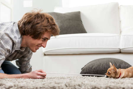 tugging: Smiling young man crouching down on a rug having a tug of war with a small chihuahua dog pulling on a length of cord