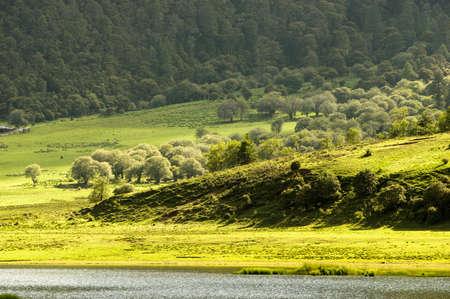 shangrila: Shangri-La meadow