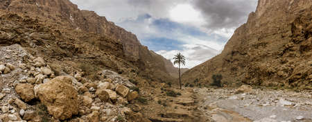 Palm tree in Todra gorges, Morocco