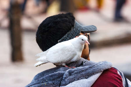 Man carriyng a pigeon on his shoulder in Patan Durbar Square, Nepal
