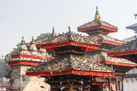 Pigeons covering Kathmandus Durbar squares temples and pagodas
