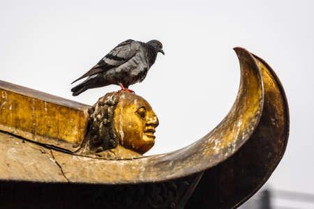 Pigeon perched on the stupa of the Swayambu nath Temple, Kathmandu, Nepal