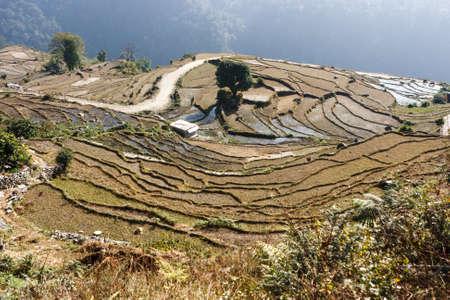 Terraced rice fields on the Annapurna Base Camp Trek, Nepal
