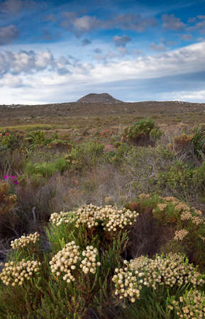 Panoramic view of the Cape of Good Hope park near Cape Town, South africa