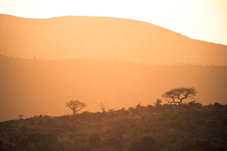 Picture of the sun rising at dawn over the hills of the Hluhluwe - imfolozi National Park in South africa 版權商用圖片