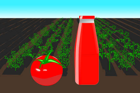 illustration of a tomato field with a bottle of tomato puree in the foreground. Agricultural concept