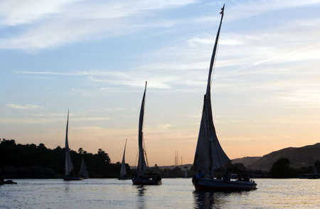 nile river: Egypt, Aswan, feluccas sailing on the Nile river in the town outskirts at sunset