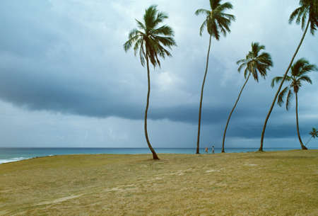 clod: Brazil, Salvador, Barra distruct, people and palms near the sea in a cloudy day