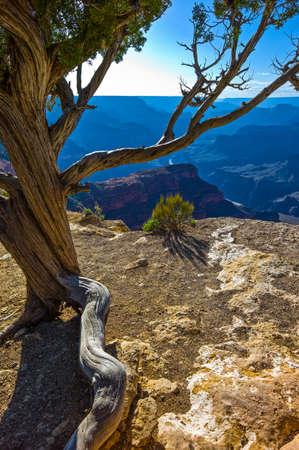 rim: U.S.A., Arizona, the Grand Canyon South Rim