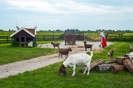 zaandam: Zaandam, Holland - July 25, 2014: Waterland district, goats and a lady working in a factory