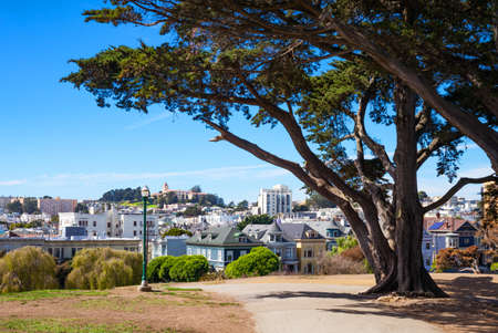 arbol alamo: San Francisco, California, the colored traditional houses of Alamo square seen from the park