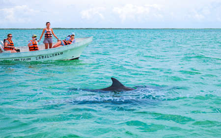 roo: Quintana Roo, Mexico - April 17, 2016:  Tourists watching dolphins in the Sian Kaan laggon reserve Editorial