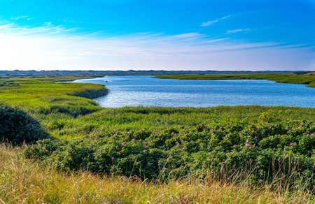 Denmark, Jutland peninsula, Nymingab district,  wild landscapes in the outflow of the Ringkobing fjord Stock Photo