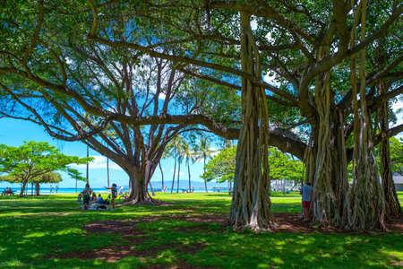Honolulu, Hawaii - May 5, 2019: Waikiki area, an ancient Banyan tree on the beach