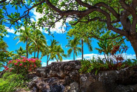 Honolulu, Hawaii , Waikiki  area, the rich vegetatin on the beach 스톡 콘텐츠