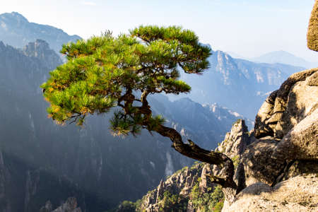 Solitary tree in the Grand Canyon of the West Sea on Mt Huangshan (Yellow Mountain), Anhui, China. Mount Huangshan is one of the most famous of China, and has inspired hundreds of poets and painters Foto de archivo