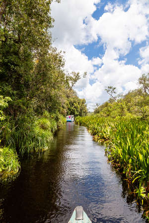 Tanjung Puting National Park, Borneo, Indonesia: peaceful waterway heading to Camp Leakey, the most famous feeding station for Orangutans inside the park