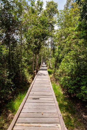 Sunny jungle trail at Camp Leakey, the most famous feeding station for Orangutans inside Tanjung Puting National Park, Kumai, Borneo, Indonesia