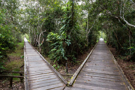 Forked jungle trail at Camp Leakey, the most famous feeding station for Orangutans inside Tanjung Puting National Park, Kumai, Borneo, Indonesia