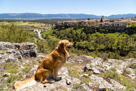 Pedraza, Castilla y Leon, Spain: golden retriever in front of the panorama of Pedraza village from the Mirador Tungueras. Pedraza is one of the best preserved medieval villages of Spain Imagens