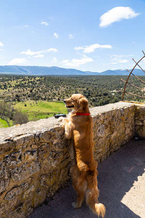 Pedraza, Castilla Y Leon, Spain: a golden retriever looking at the panorama from in Mirador. Pedraza is one of the best preserved medieval villages of Spain, not far from Segovia Imagens