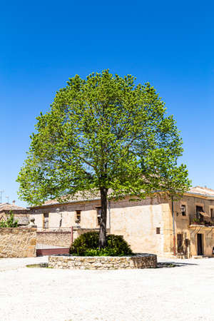 may 2019, Pedraza, Castilla Y Leon, Spain: a lonely tree in the Plaza del Ganado. Pedraza is one of the best preserved medieval villages of Spain, not far from Segovia Editorial