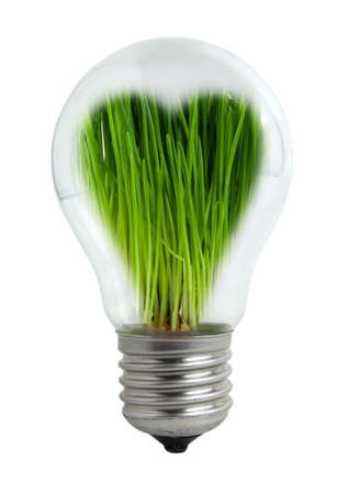 Young  grass in a light bulb in the form of heart Stock Photo - 6695410