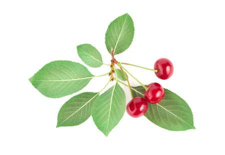 Three ripe cherries isolated on white background photo