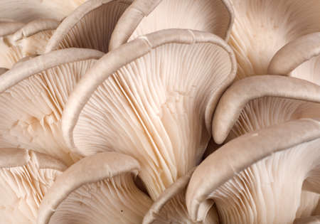 Background from mushroom Stock Photo - 8162295