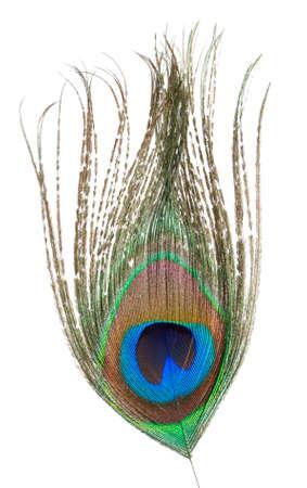 piuma di pavone: Piume di pavone Archivio Fotografico