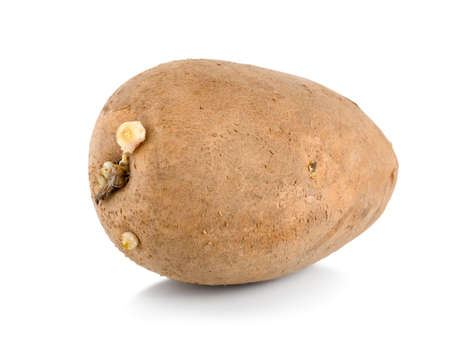 russet potato: One raw potatoe isolated