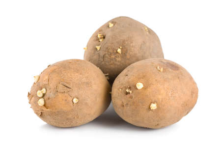 russet potato: Three raw potatoes