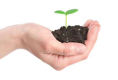 Human hands and young plant isolated Stock Photo - 9160190