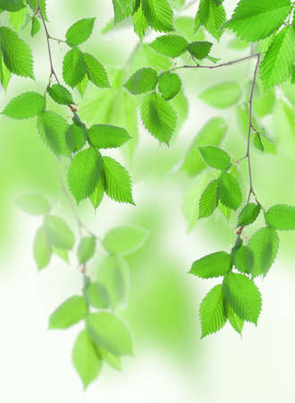 Beautiful leaves Stock Photo - 9694496