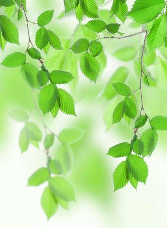 venation: Beautiful leaves
