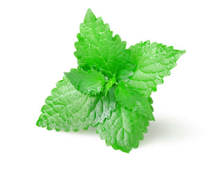 Green mint Stock Photo - 10345559